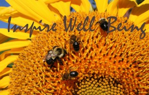 bees on sunflower inspire2